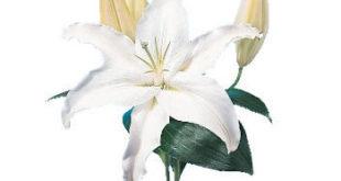 Semnificatia florilor 1