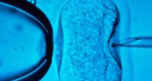 Fertilizarea in vitro - Diete & Health
