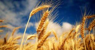 5 alimente miraculoase - Diete & Health