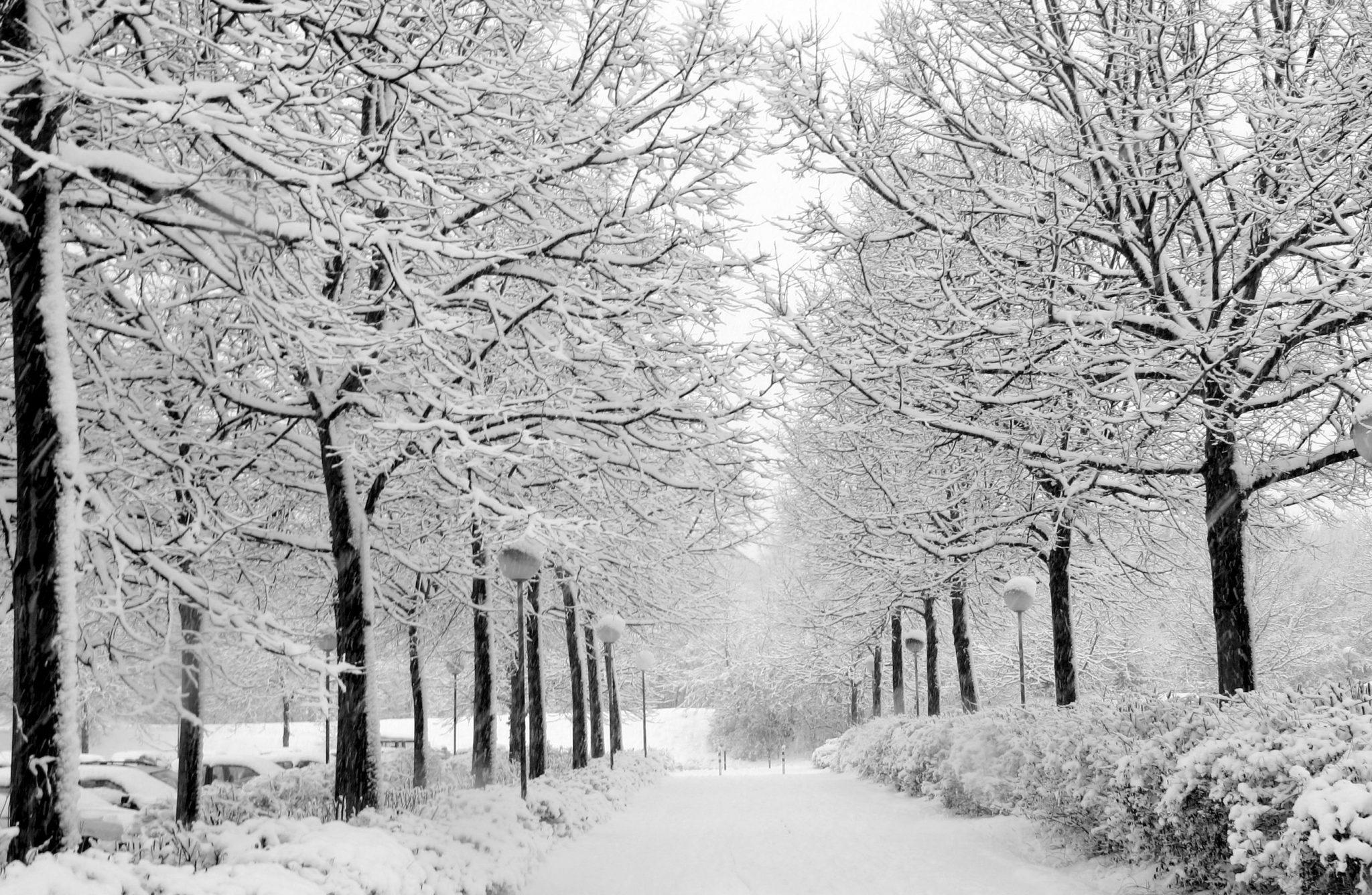interpretare, vis, vise, anotimp, anotimpuri, iarna