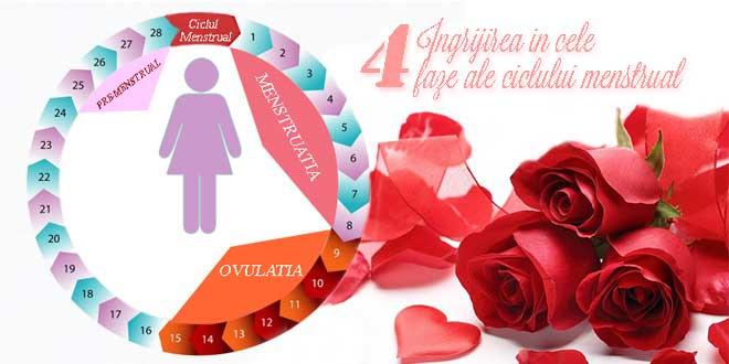 faze-ale-ciclului-menstrual