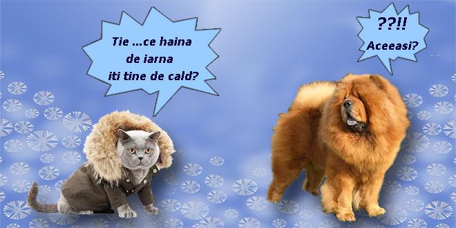 haina-de-iarna
