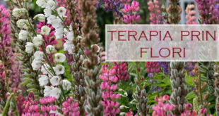 terapia-prin-flori