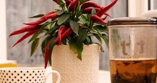Ceaiuri bune pentru fertilitate - Health & Fitness