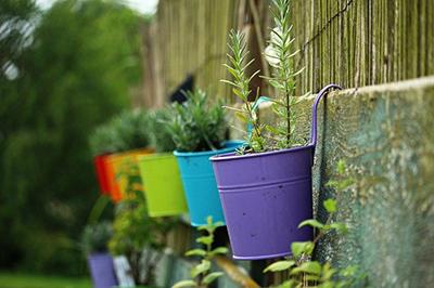 plante-crescute-la-bloc