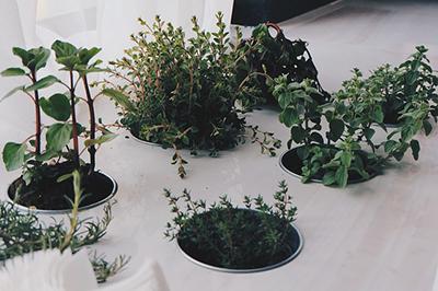 plante taiat-renascut